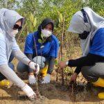 Komitmen Peduli Lingkungan, PT Timah Tbk WO Kepri-Riau Tanam 5.000 Bibit Mangrove